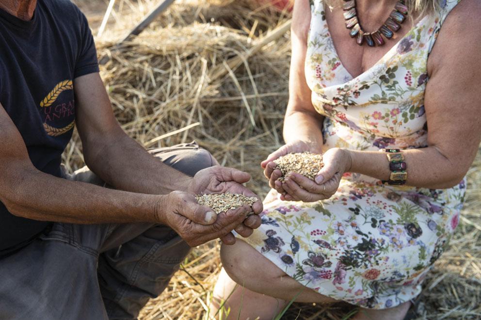 La relance de la culture du blé en Corse : le pain des Romains